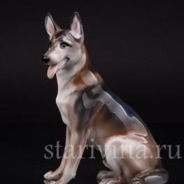 Статуэтка собаки из фарфора Овчарка, Rosenthal, Германия, 1956 год.